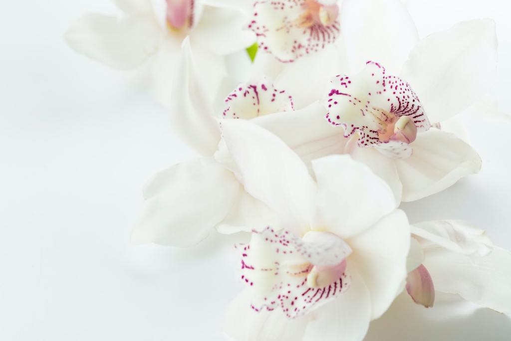 A picture of a white orchid to show truth