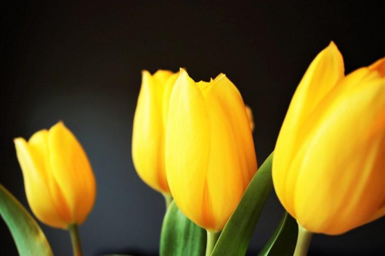 Tulips - popular wedding flower example