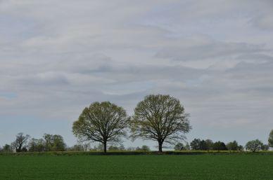 Landschaft Jersbek (Quelle Bruno Krautz)