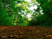 Einstieg in den Waldpool
