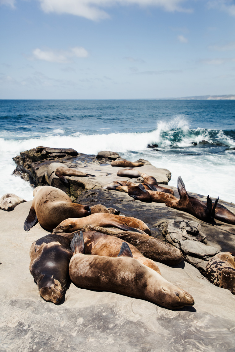 Sea lions by the beach