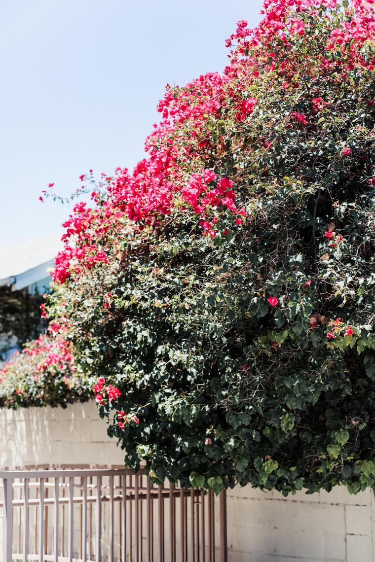 Fuscia flowers on a tree