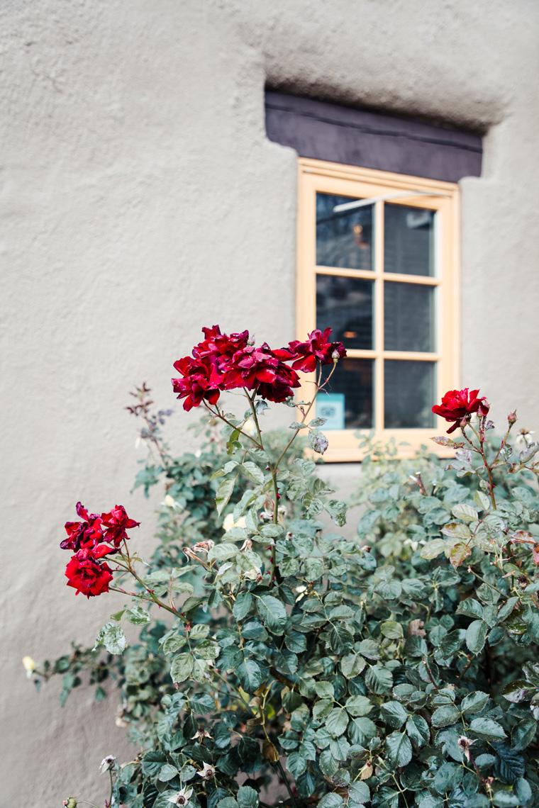 La Posada de Santa Fe flowers