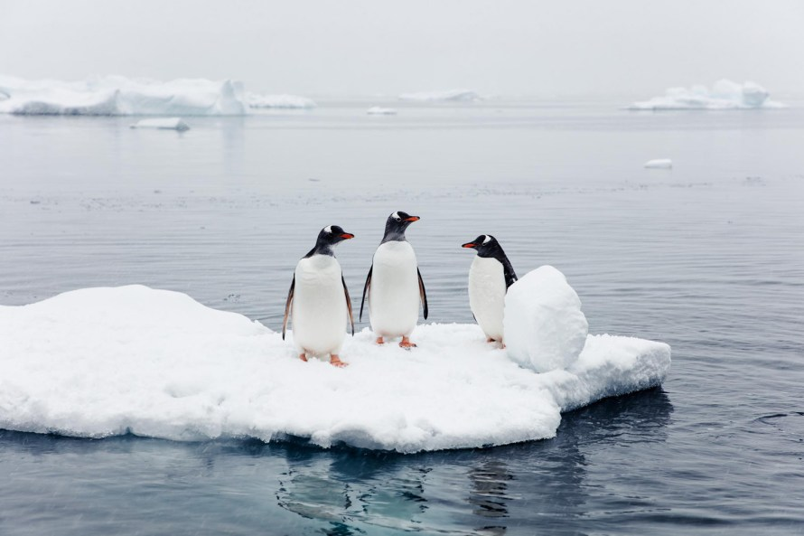 Penguins on an iceberg