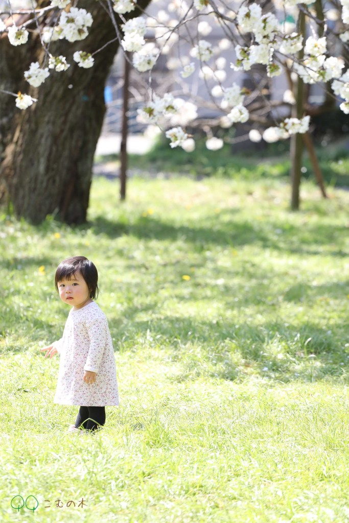 こむの木家族写真撮影会小金井公園桜