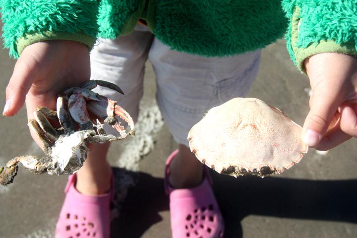 58GradNord - Elternzeit in Neuseeland - Strandfunde