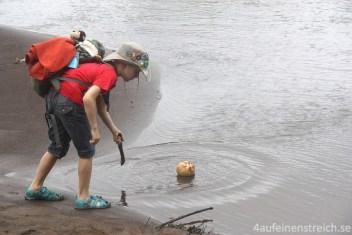 Kokosnuss im Wasser