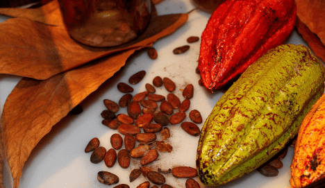 Cacao fruit, leaves and beans