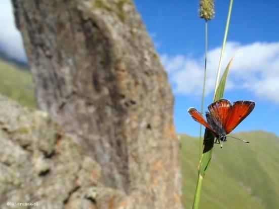 Chaukhi - gruzińskie Dolomity - Piąty Kierunek05