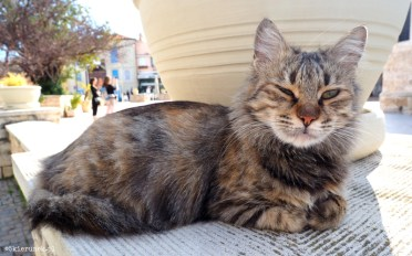 Cypryjskie koty - Piąty Kierunek12
