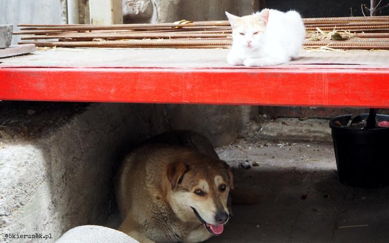 Turcja - zwierzęta Stambuł - Piąty Kierunek