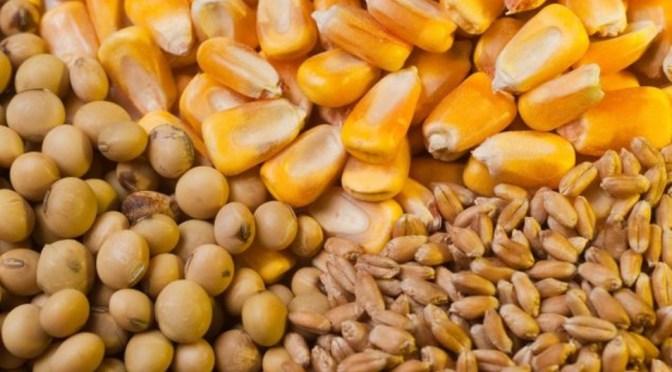 Balance positivo para soja, trigo y maíz