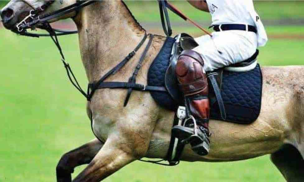 Fancy a game of polo for your hen or stag weekend?