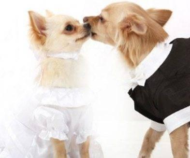 Luxury Dog Clothes