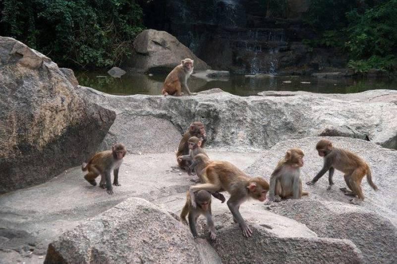 monkey island Sanya