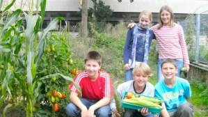 Mit Tomaten und Mais etwas über Armut lernen: Kinder im Schulgarten des Friedrich-Spree-Gymnasiums - 5VIER