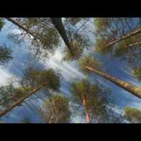 Freizeit: Europas wilde Wälder – Multivisionsshow von Markus Mauthe - 5VIER