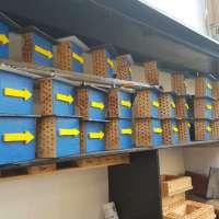 Paten für Nistkästen und Insektenhotels am Mosel-Camino gesucht!