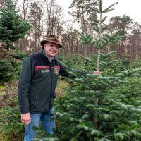 Ökologisch angebaute Weihnachtsbäume in jeder beliebigen Größe: Forstdirektor Gundolf Bartmann kann auf ein großes Angebot zurückgreifen. Bild: Rolf Lorig