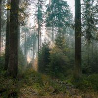 Trockenheit schädigt die Bäume und den Waldboden