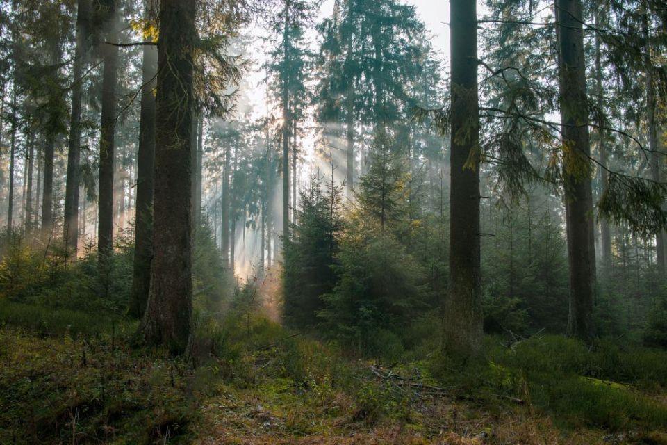 Die Brandgefahr in den Wäldern und auf den Wiesen ist in der Region hoch.