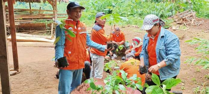 Laznas LMI Semai Ratusan Bibit Pohon Kopi Bersama Relawan
