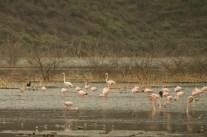 kenya-2015-lake-bogoria-3874