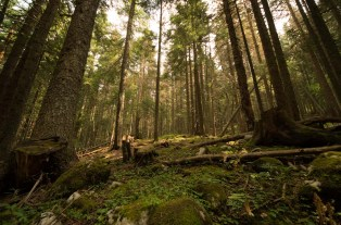 Natural forest on the edge of Durmitar National Park
