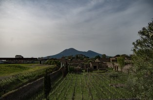 View of Mount Vesuvius over reconstructed vineyards. Thanks to thousands of preserved seeds and plant remains we have a pretty good picture of what people ate in Roman cities.
