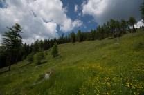 Mountain pasture in the Austrian Alps/Dolomites