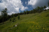 Mountain pasture in the Austrian Alps/Dolomites