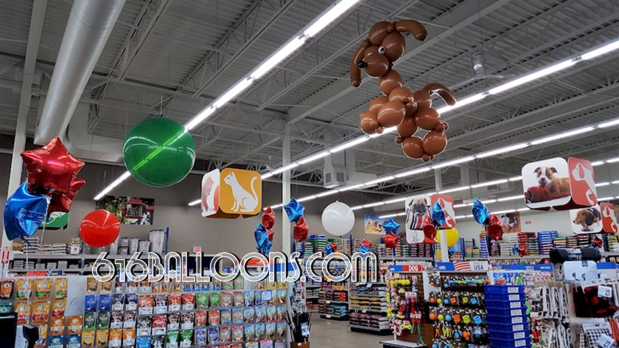 Giant poodle & 3' round balloons in the ceiling for Chow Hound Pet Supplies Grand Opening event 616Balloons.com Grand Rapids, Mi. Premium balloon art & decor. Corporate events, private parties..