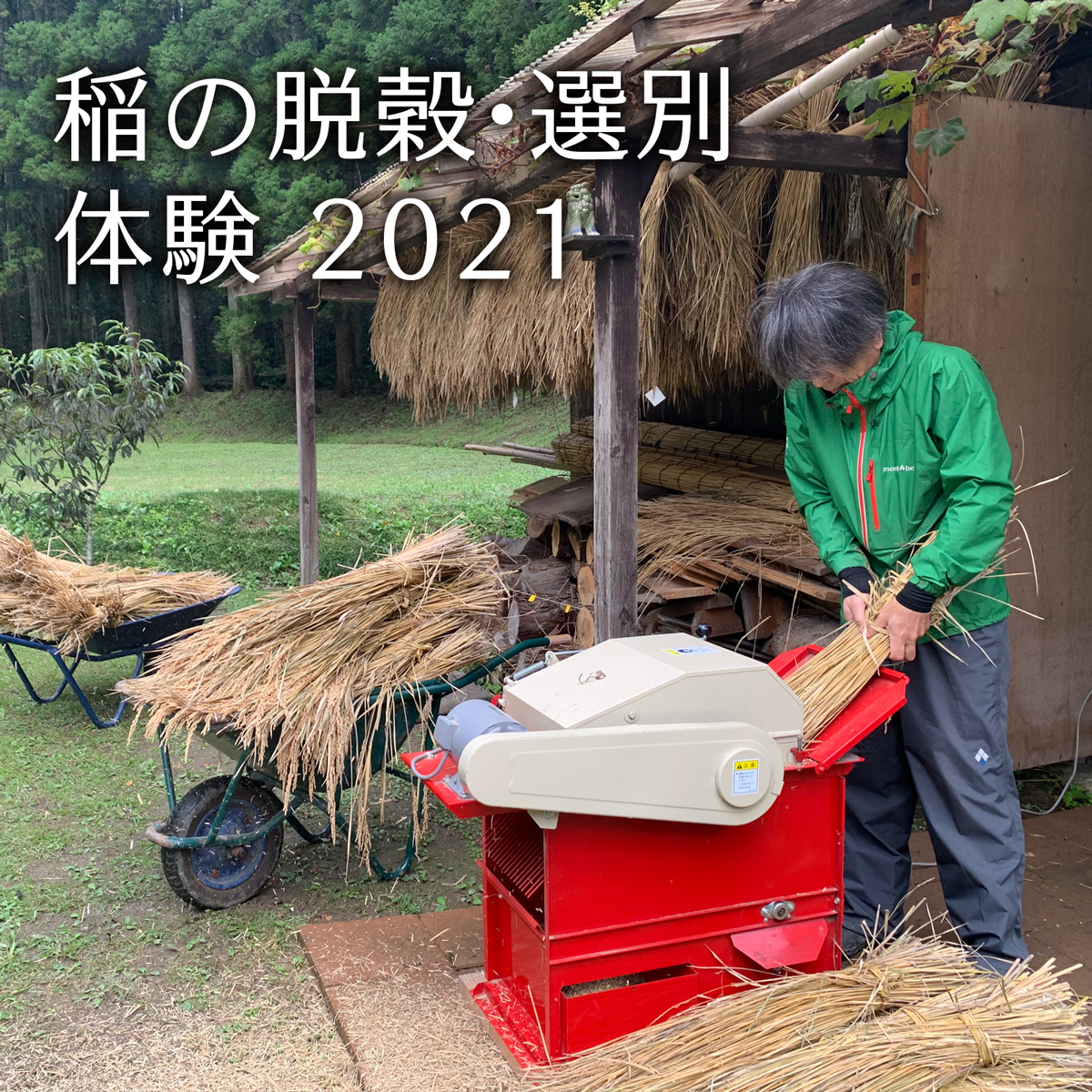 You are currently viewing 稲の脱穀・選別ワークショップ 2021