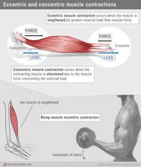 Image result for pain after weightlifting