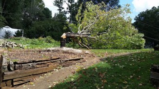 Another view of tree removal