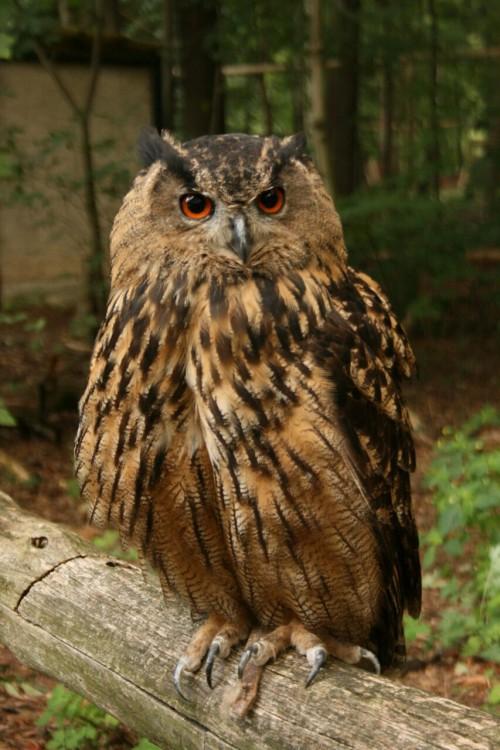bokuto owls explore tumblr posts and