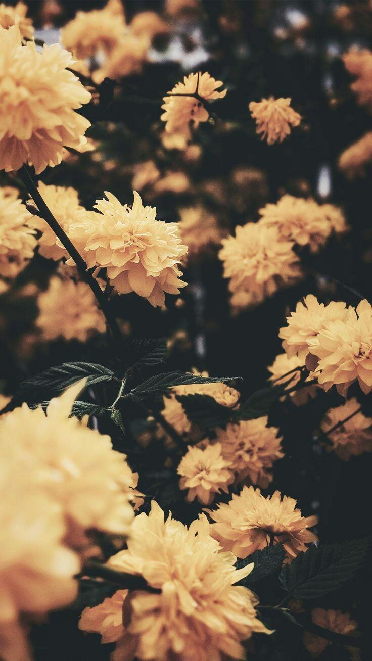 Aesthetic Wallpaper Flower Wallpaper