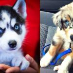 Funny Dogs Tumblr Posts Tumbral Com