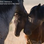 Equus Ferus Wild Horse Photography Happy Thanksgiving From Equus Ferus Wild Horse