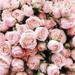 Softly Whispering Dreams Softly Whispering Dreams Pretty Pink Roses