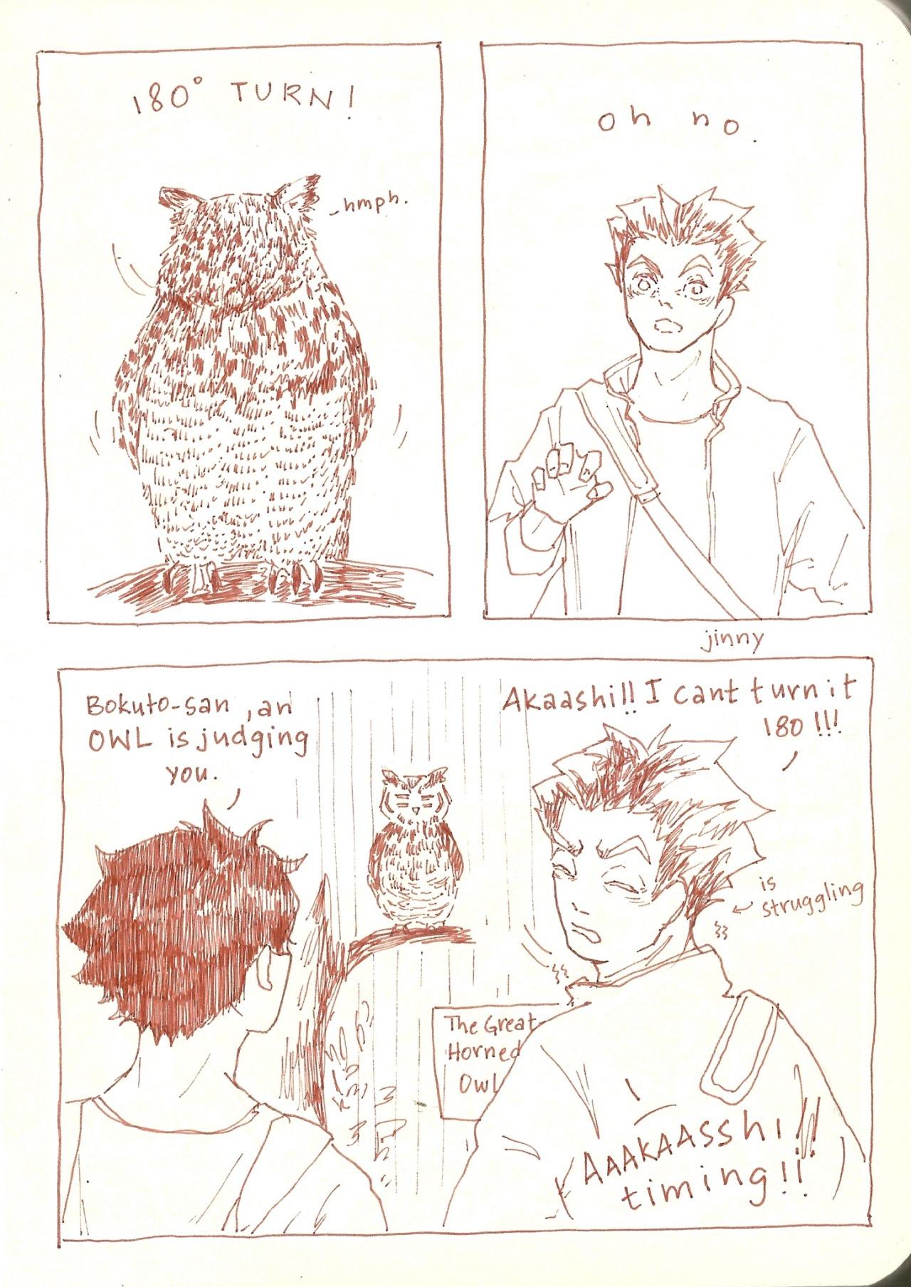 120 bokuaka bokuto 0 owl 1