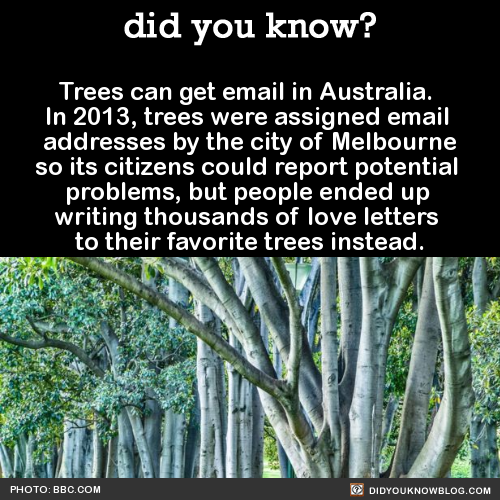 "did-you-kno: "" Trees can get email in Australia. In 2013, trees were assigned email addresses by the city of Melbourne so its citizens could report potential problems, but people ended up writing thousands of love letters to their favorite trees..."
