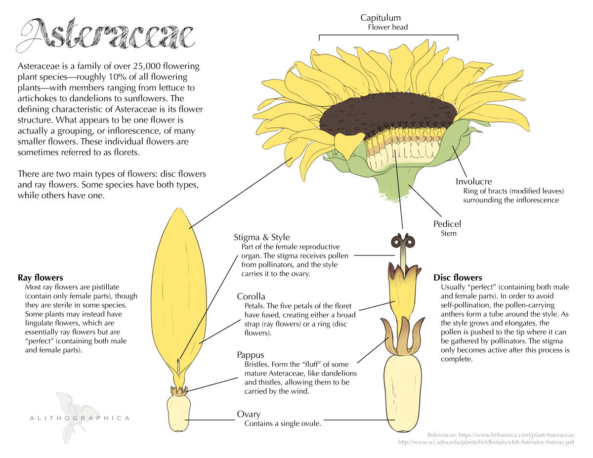 Someone Recently Asked Me Why Flower Anatomy