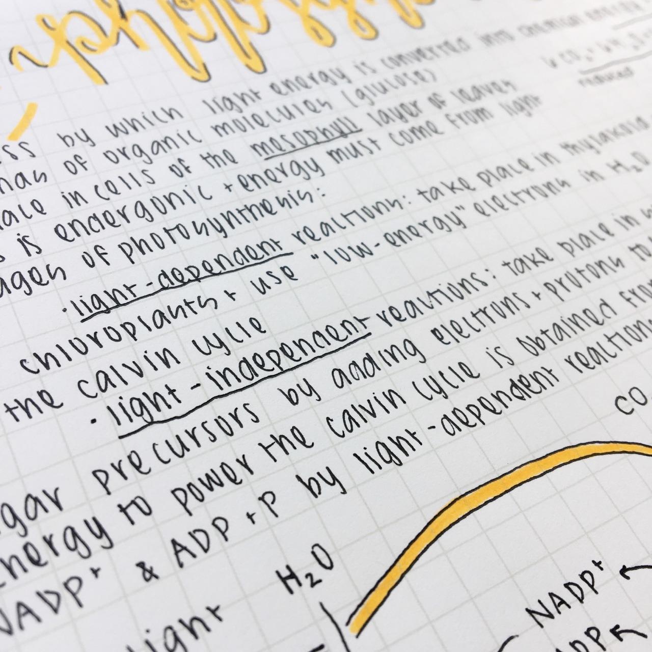 Aesthetic Cute Neat Handwriting Practice Sheets