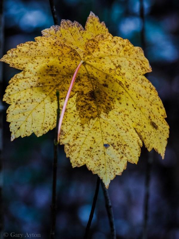 autumn leaf in winter