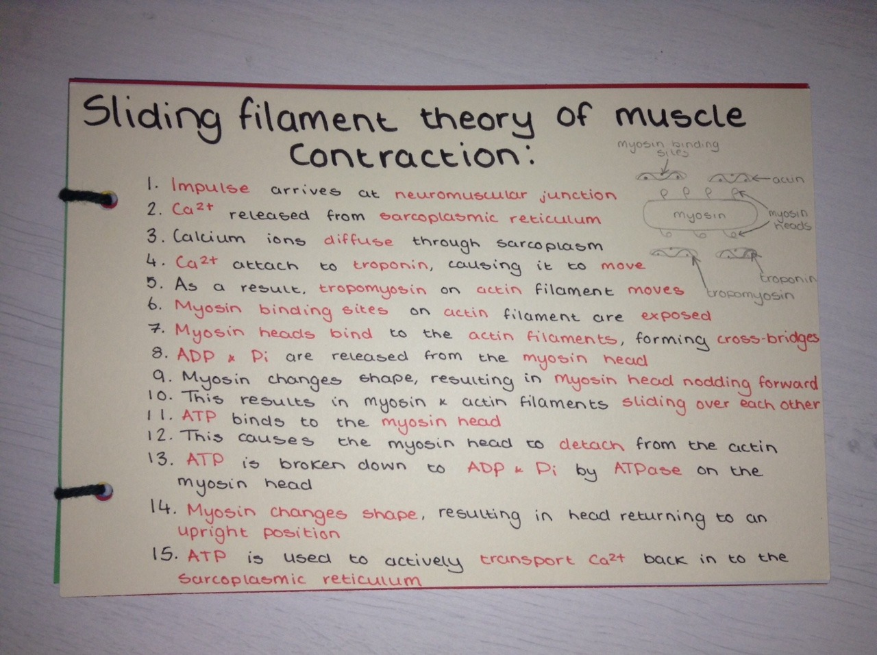 A Level Biology Revision