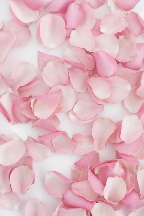 Rose Petals Tumblr Losing