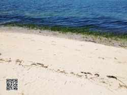 Footprints on Oyster Bay