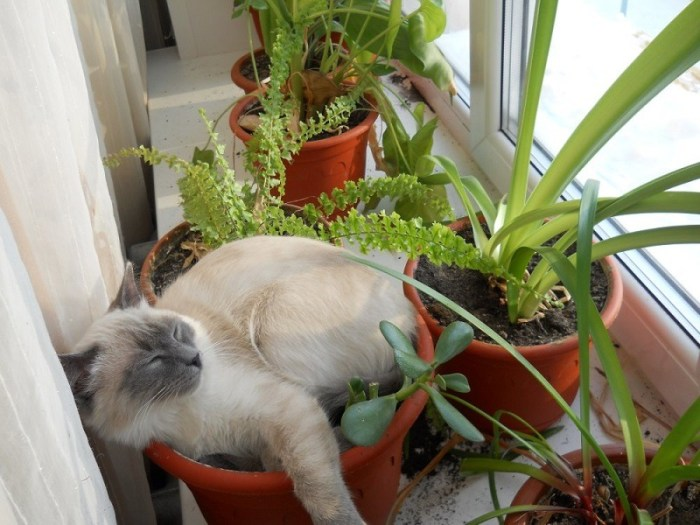 Plantar gatos