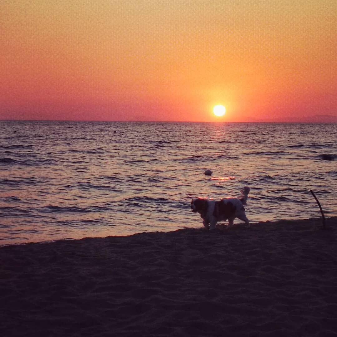 #sunset #dog #doglife #doglove #dogsofinsta #water #dawn #evening #sea #beach #ocean #sun #canine #dusk #mammal #pet #horizon...